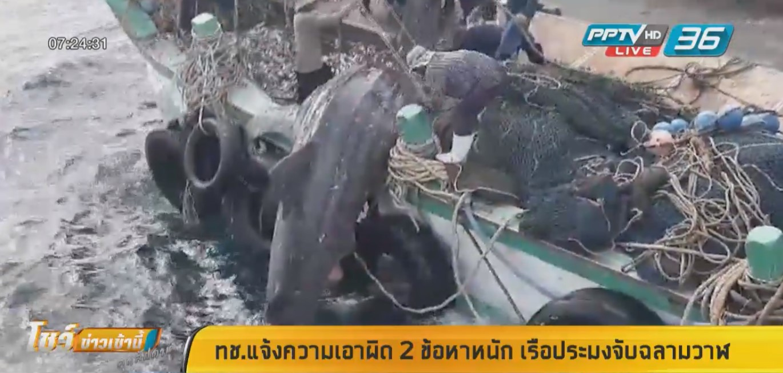 ทช.แจ้งความเอาผิดเรือประมงจับฉลามวาฬ พร้อมอายัดเรือ-ปลาที่จับได้ชั่วคราว
