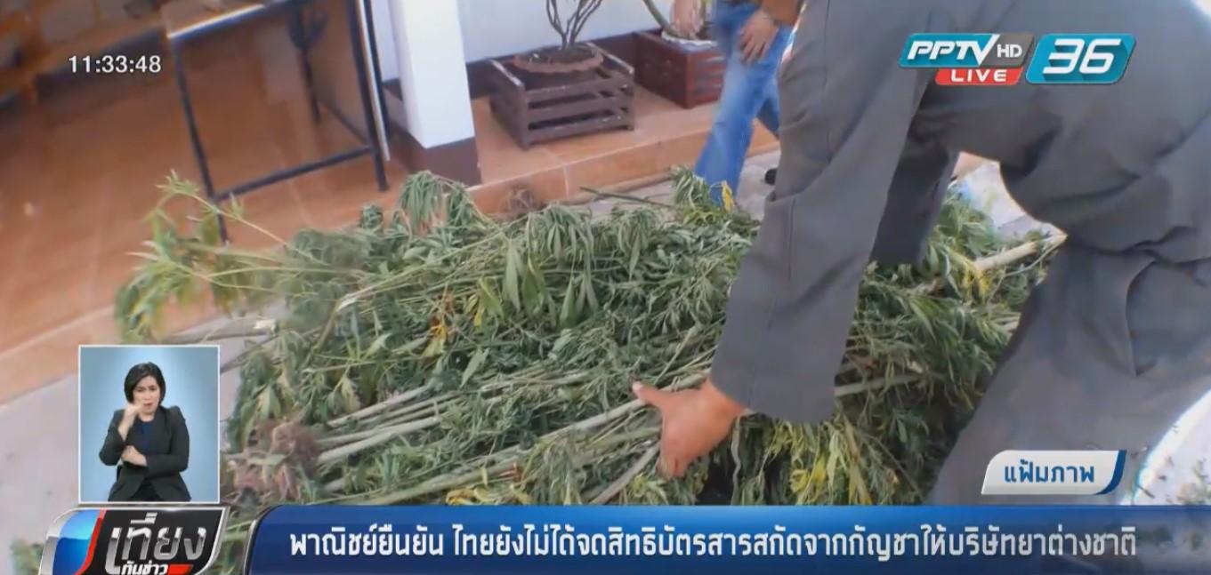 """พาณิชย์ ยืนยันไทยยังไม่ได้จดสิทธิบัตรสารสกัดจาก """"กัญชา"""" ให้บริษัทต่างชาติ"""