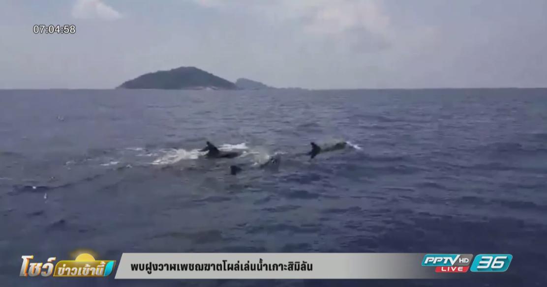 พบฝูงวาฬเพชฌฆาตโผล่เล่นน้ำเกาะสิมิลัน