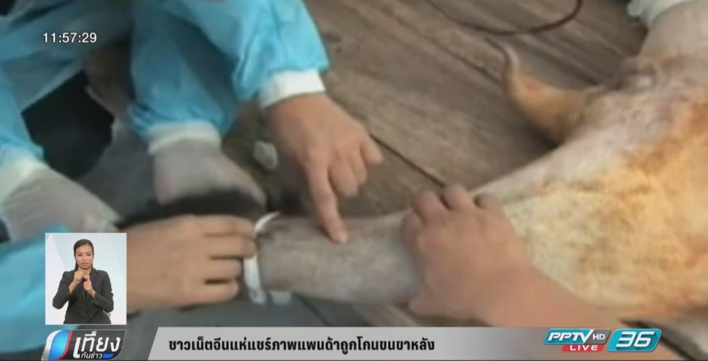 ชาวเน็ตจีนแห่แชร์ภาพแพนด้าถูกโกนขนขาหลัง