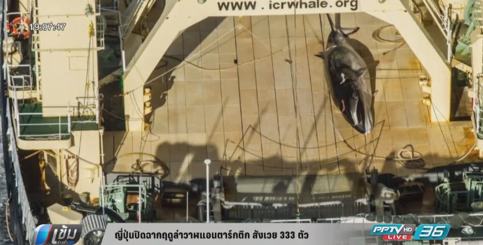 ญี่ปุ่นปิดฉากฤดูล่าวาฬสังเวย 333 ตัว