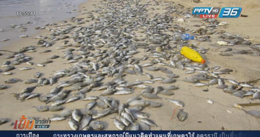 ชาวมาบตาพุดไม่เชื่อปลาตายเกิดจากแพลงก์ตอนบลูม (คลิป)