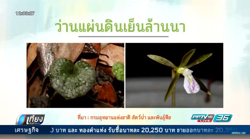 นักวิจัยไทย-ต่างชาติ ค้นพบพรรณไม้ใหม่ในไทย 8 ชนิด (คลิป)