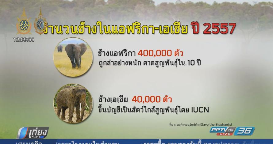 ล่าลูกช้างเพื่อธุรกิจท่องเที่ยวปัญหาใหญ่ช้างไทย (คลิป)
