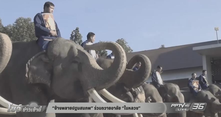 """""""ช้างพลายปฐมสมภพ"""" ร่วมถวายอาลัย """"ในหลวง"""" (คลิป)"""