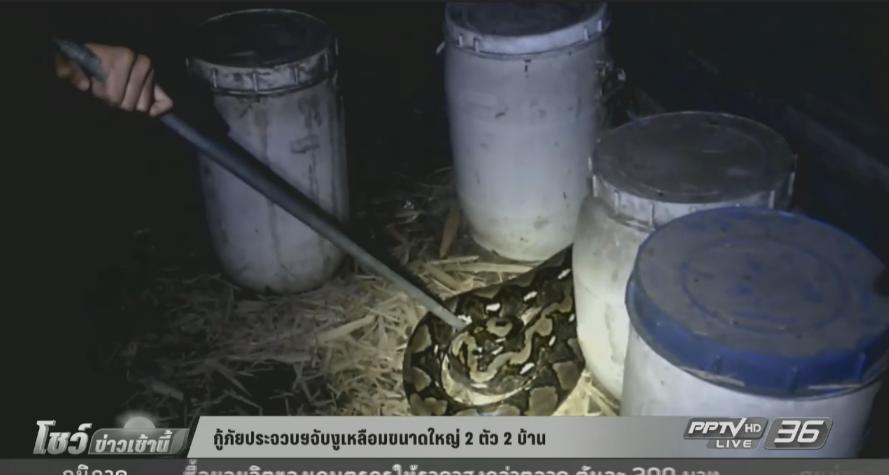 กู้ภัยประจวบฯ จับงูเหลือมขนาดใหญ่ 2 ตัว 2 บ้าน (คลิป)