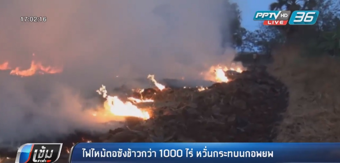 ไฟไหม้ตอซังข้าวกว่า 1,000 ไร่ หวั่นกระทบนกอพยพ