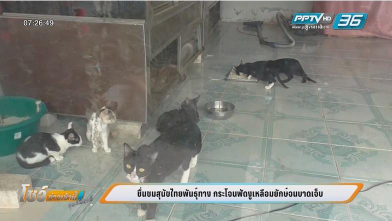 """ชื่นชม """"เจ้าตังส์"""" สุนัขไทยพันทางสู้งูเหลือมยักษ์ป้องกันกินแมว"""