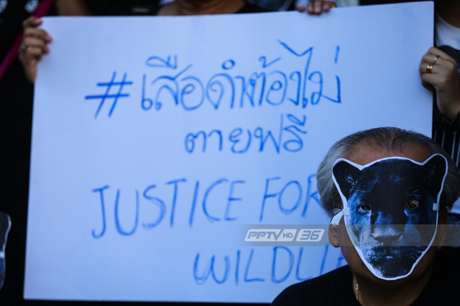 """""""กราฟฟิตี้เสือดำ"""" ทั่วกรุง แทนเสียงเรียกร้องความยุติธรรม !!"""