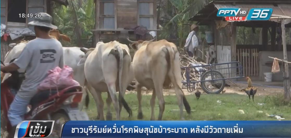 ชาวบุรีรัมย์หวั่นโรคพิษสุนัขบ้าระบาด หลังพบวัวตายเพิ่ม