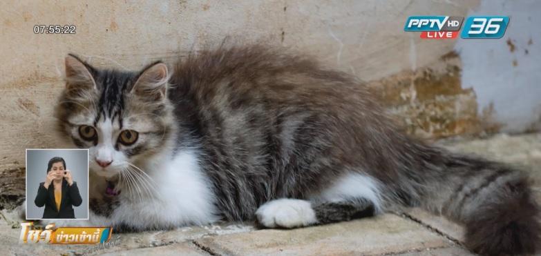 หมู่บ้านนิวซีแลนด์เล็งห้ามเลี้ยงแมว