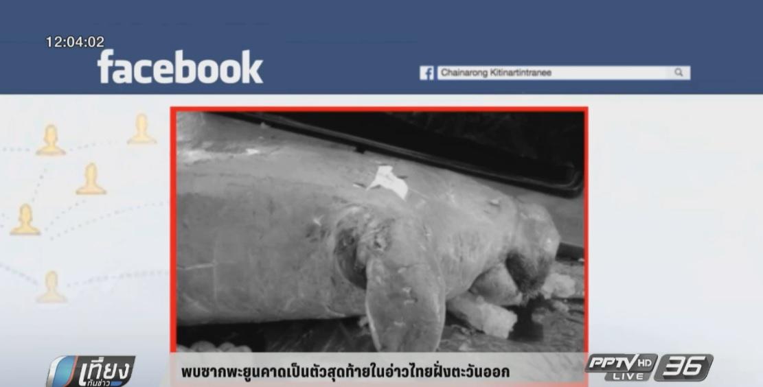พบซากพะยูนคาดเป็นตัวสุดท้ายในอ่าวไทย