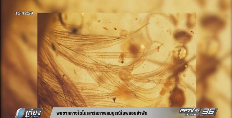 พบซากหางไดโนเสาร์สภาพสมบูรณ์ในพลอยอำพัน