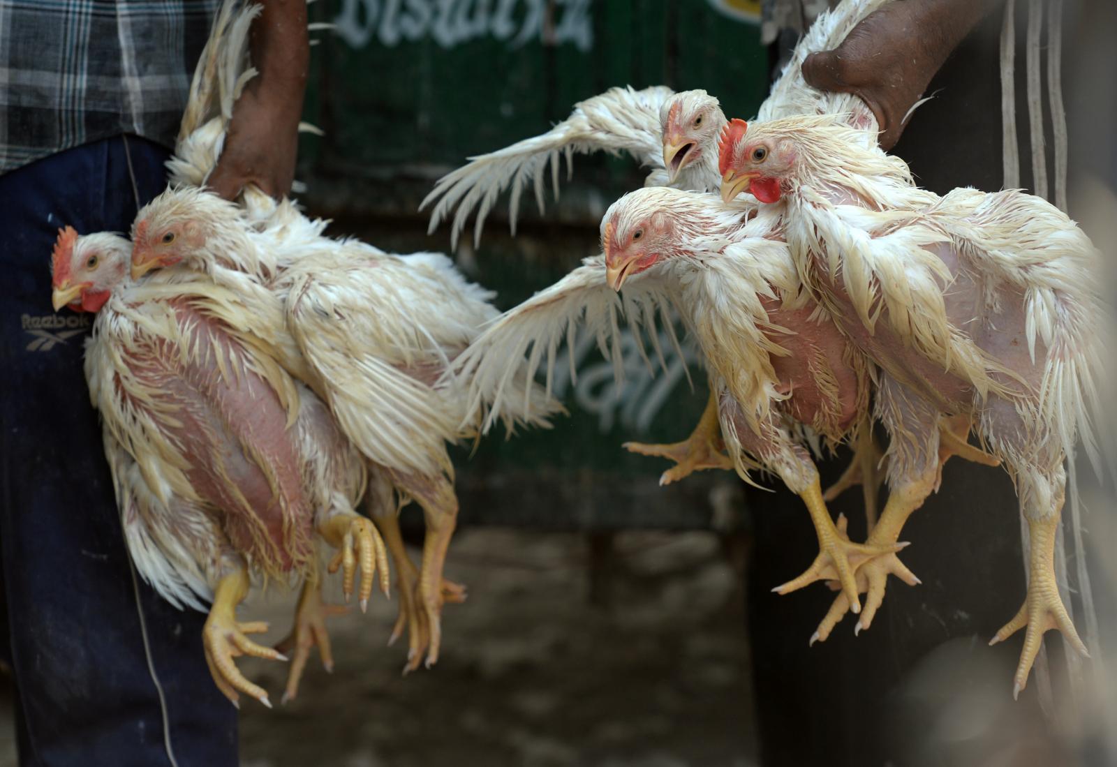 """กรมควบคุมโรค เผยไทยเฝ้าระวัง """"โรคไข้หวัดนก"""" ต่อเนื่อง หลังระบาดหลายประเทศ"""