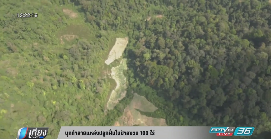 """""""ศรีวราห์"""" นำทีมทำลายแหล่งปลูกฝิ่นในป่าสงวน 100 ไร่ จ.ตาก"""