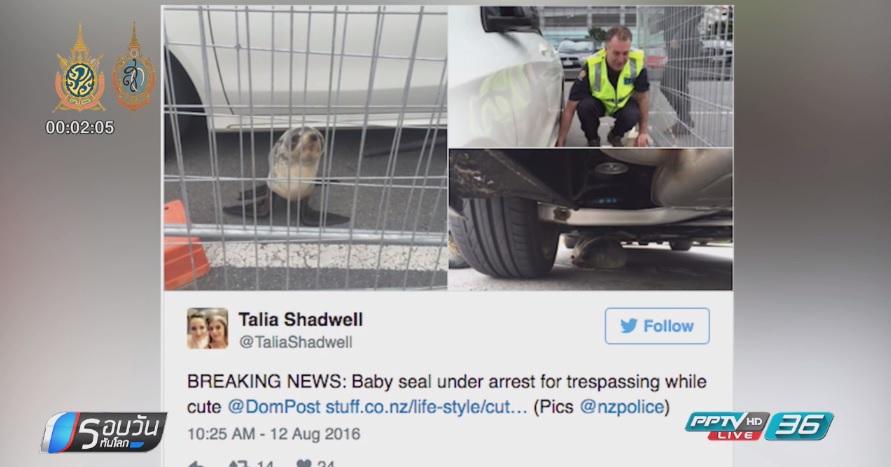 ตำรวจกีวีจับลูกแมวน้ำข้อหาบุกรุก