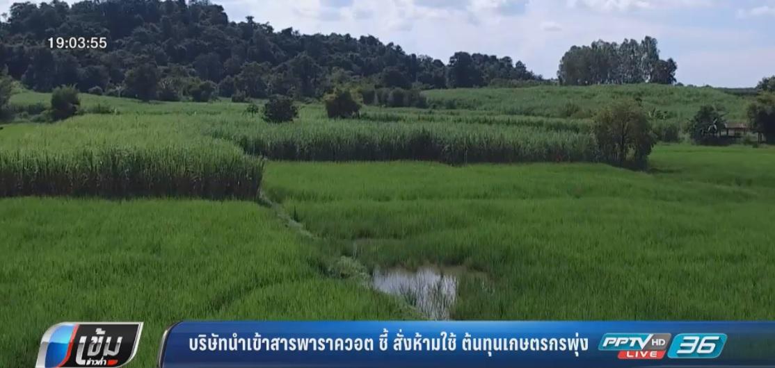 บริษัทนำเข้าสารพาราควอต ชี้ สั่งห้ามใช้-ต้นทุนเกษตรกรพุ่ง
