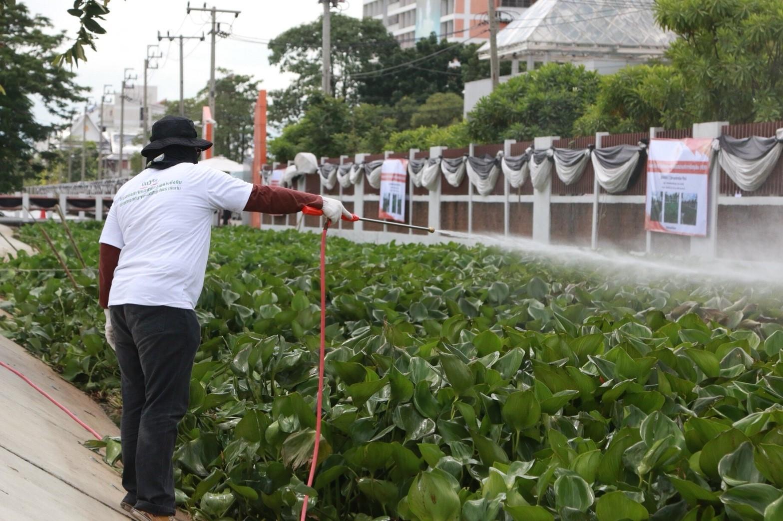 สจล. โชว์วิธีกำจัดผักตบชวาด้วยสมุนไพร
