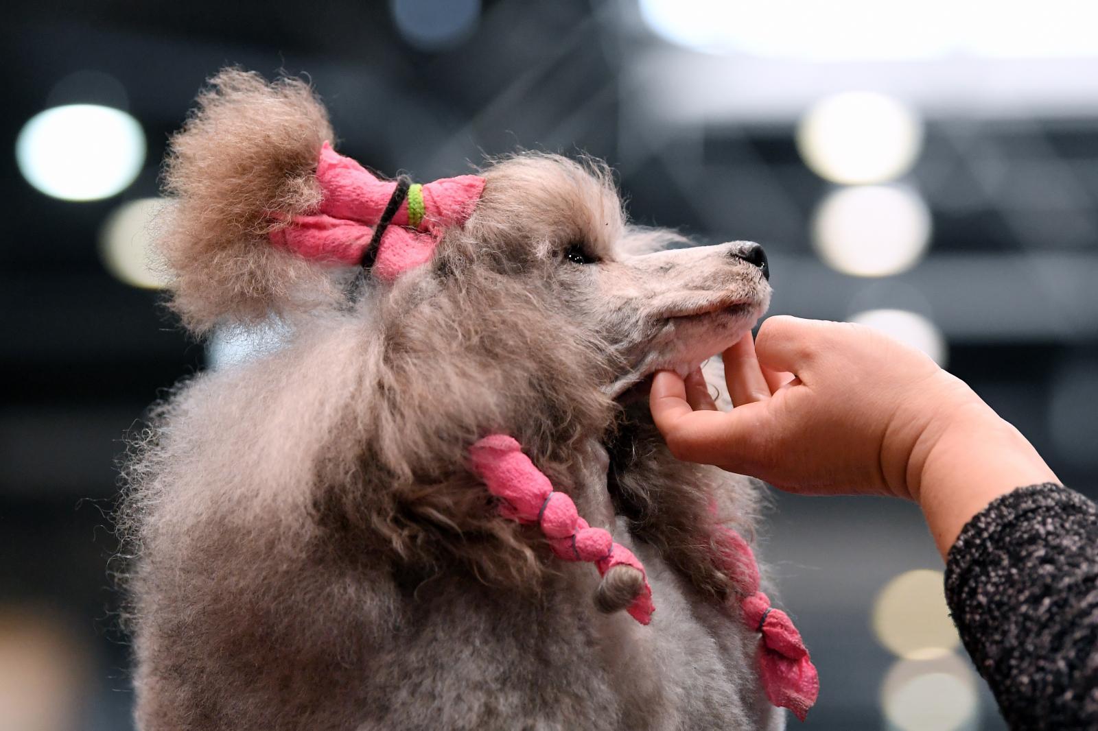 คนโสดเฮ! เลี้ยงสุนัขลดเสี่ยงเป็นโรคหลอดเลือดหัวใจ 33%