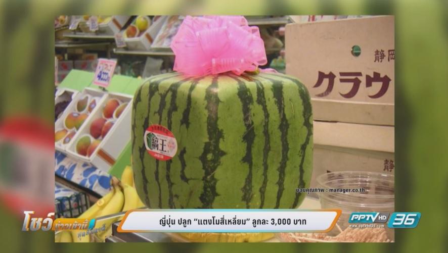 """45 ปี """"แตงโมสี่เหลี่ยมญี่ปุ่น"""" จากของดูเล่นสู่สินค้าราคาแพง"""