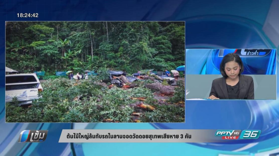 ต้นไม้ใหญ่ล้มทับรถในลานจอดวัดดอยสุเทพเสียหาย 3 คัน