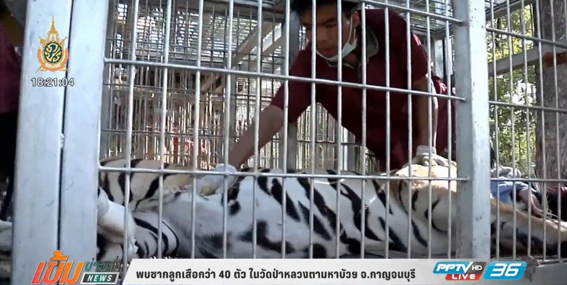 กรมอุทยานแห่งชาติสัตว์ป่าฯ แจงกรณีพบซากลูกเสือในวัดหลวงตาบัว (คลิป)