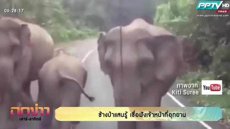 คลิปดัง!  ช้างป่าแสนรู้ เชื่อฟังเจ้าหน้าที่สั่งให้หลบทางนักท่องเที่ยว