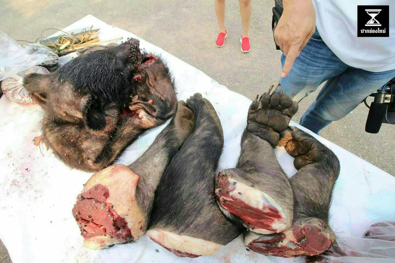 """""""อุ้งตีนหมี-หางเสือ-เนื้อสัตว์ป่า"""" เสี่ยงต่อการติดเชื้อ"""