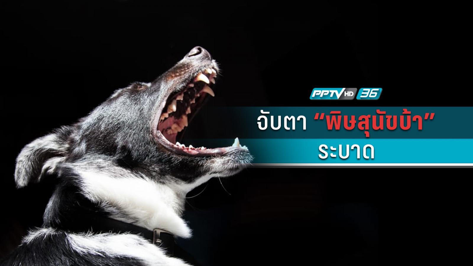 ระวัง! หมาแมวเป็นบ้าเพิ่ม 1.5 เท่า ตายแล้ว 3 ราย