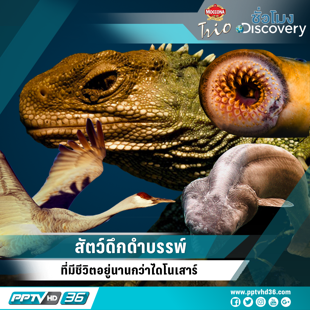สัตว์ดึกดำบรรพ์ ที่มีชีวิตอยู่นานกว่าไดโนเสาร์