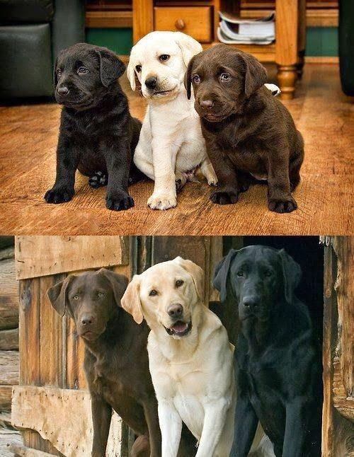 """เหตุผลของคนที่เลือก """"น้องหมา"""" เป็น Buddy"""