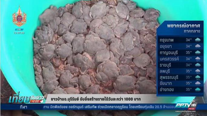 ชาวบุรีรัมย์พลิกวิกฤติฝนออกจับอึ่งปิ้งขาย สร้างรายได้วันละกว่า 1,000 บาท