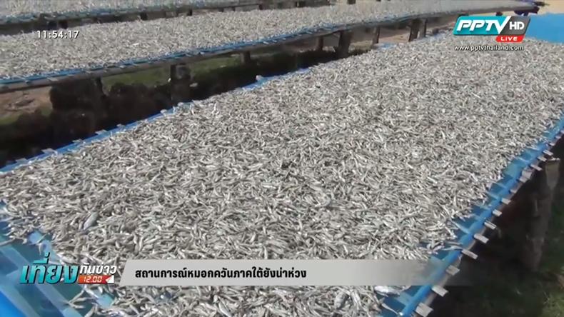 นกนางแอ่นเลิกทำรังจากวิกฤตหมอกควันภาคใต้-รายได้จากปลาตากแห้งลด
