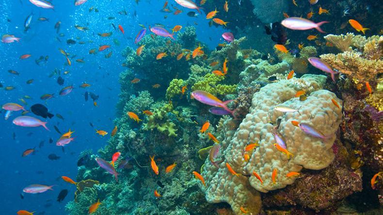 """ยลสวรรค์บนผืนน้ำ """"เกรท แบร์ริเออร์ รีฟ"""" แนวปะการังมรดกโลก"""