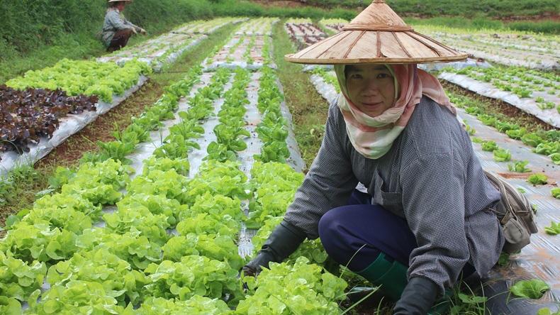 นายกฯ สั่งจัดศูนย์เรียนรู้อัพเกรดเกษตรไทย พร้อมอนุมัติ 4.5 พันล้าน แก้ไขหนี้เสียเกษตรกร