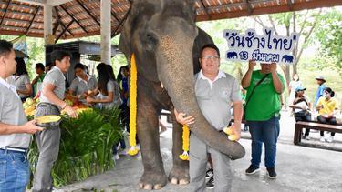 """สวนสัตว์เปิดเขาเขียว เลี้ยงเค๊กก้อนยักษ์ """"พังแสนดาว"""" ฉลองวันช้างไทย"""