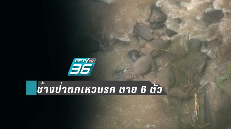 สลด!! ช้างป่า พลัดตกเหวนรก ตาย 6 ตัว เร่งช่วยอีก 2 ตัวที่เหลือ