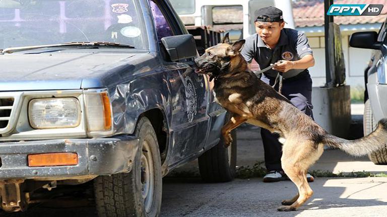 """""""ฝึกทบทวนสุนัขสืบหาวัตถุระเบิด""""  เสริมเขี้ยวเล็บ..รับมือเหตุรุนแรง"""
