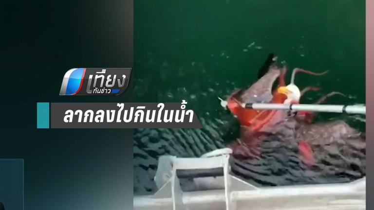 หมึกยักษ์ ลากนกอินทรี ลงไปกินน้ำใน