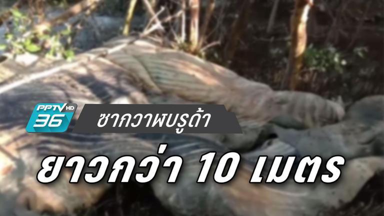 พบซากวาฬบรูด้า ยาวกว่า 10 เมตร เกยตื้นชายฝั่งพระสมุทรเจดีย์