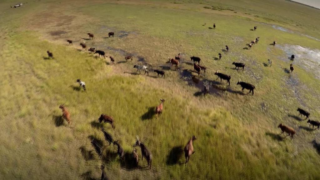 """ชั่วโมง Discovery ตอน ดินแดนลึกลับ """"ผืนป่าแซมเบีย"""""""