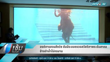 """องค์การสวนสัตว์ฯ ยัน มีระบบตรวจสวัสดิภาพระดับสากล ไม่ได้บังคับ """"ช้างดำน้ำ"""""""