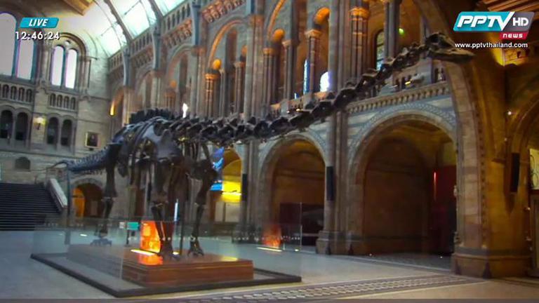 """พิพิธภัณฑ์ลอนดอนเตรียมปลดระวาง """"ดิปปี้"""" โครงกระดูกไดโนเสาร์ 100 ปี"""