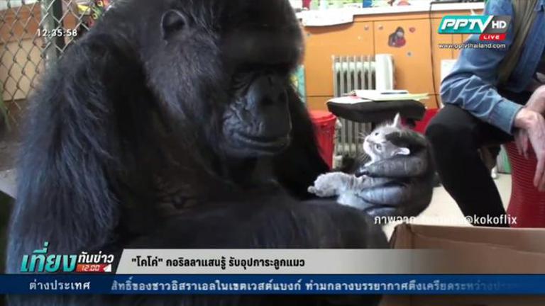 กอริลลาแสนรู้ รับอุปการะลูกแมว-ย่าทวดวัย 103 ปี ใส่ชุดยอดมนุษย์ฉลองวันเกิด-บิกินี่รักษ์โลก (คลิป)