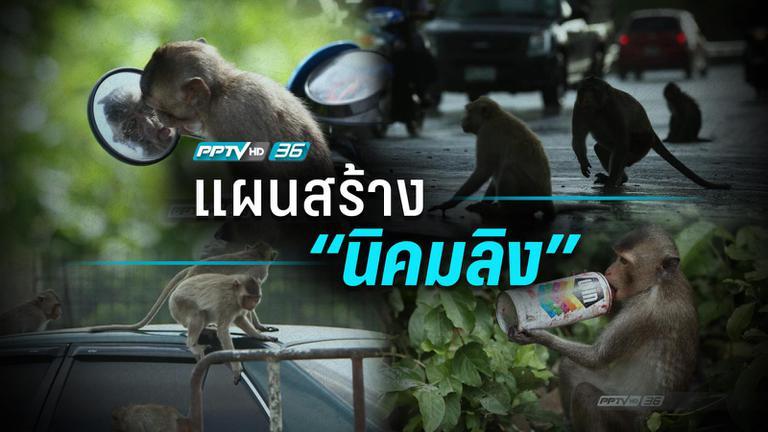 """เมื่อ""""ลิง""""มีปัญหากับ """"คน"""" จึงจำเป็นต้องมีนิคมของตนเอง"""