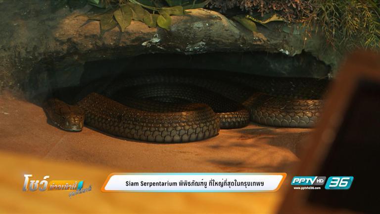 Siam Serpentarium พิพิธภัณฑ์งู ที่ใหญ่ที่สุดในกรุงเทพฯ