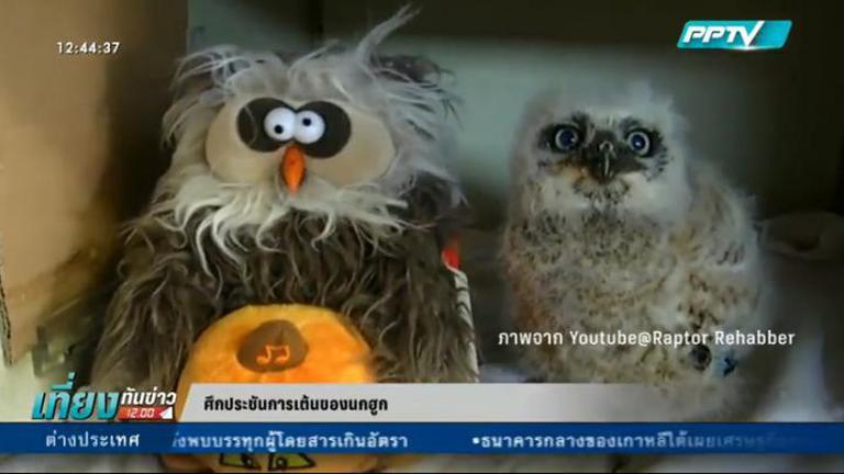ประชันลีลา! นกฮูกในสหรัฐฯเต้นกับตุ๊กตานกฮูกคู่ใจ (คลิป)