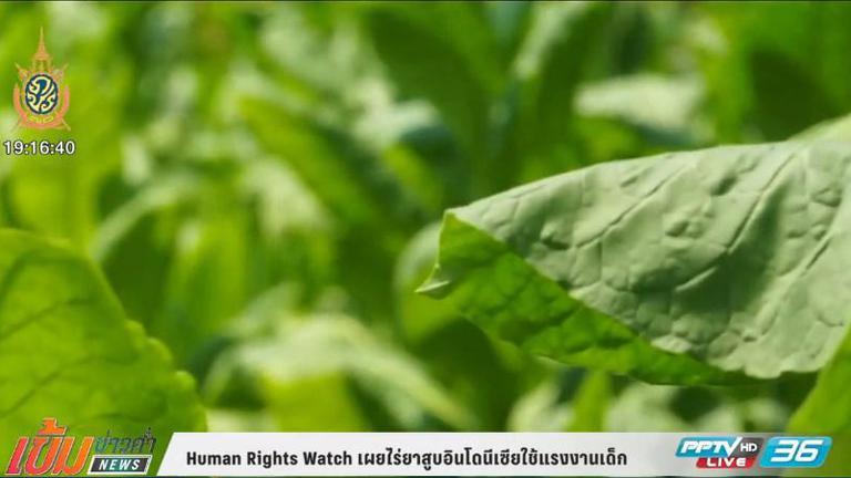 ฮิวแมนไรท์วอทช์ พบไร่ยาสูบอินโดนีเซียใช้แรงงานเด็ก