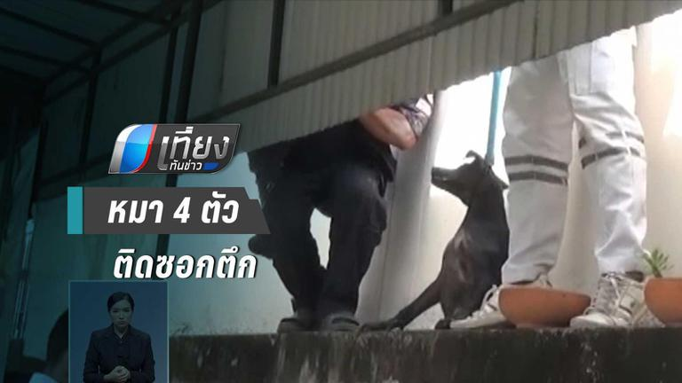 ช่วยชีวิต !! กู้ภัย ช่วย 4 หมา ติดซอกตึก