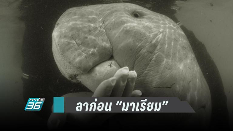 """""""โตโน่ - เต้ย"""" อาลัย """"มาเรียม""""  วอนคนไทยใส่ใจสิ่งแวดล้อม"""